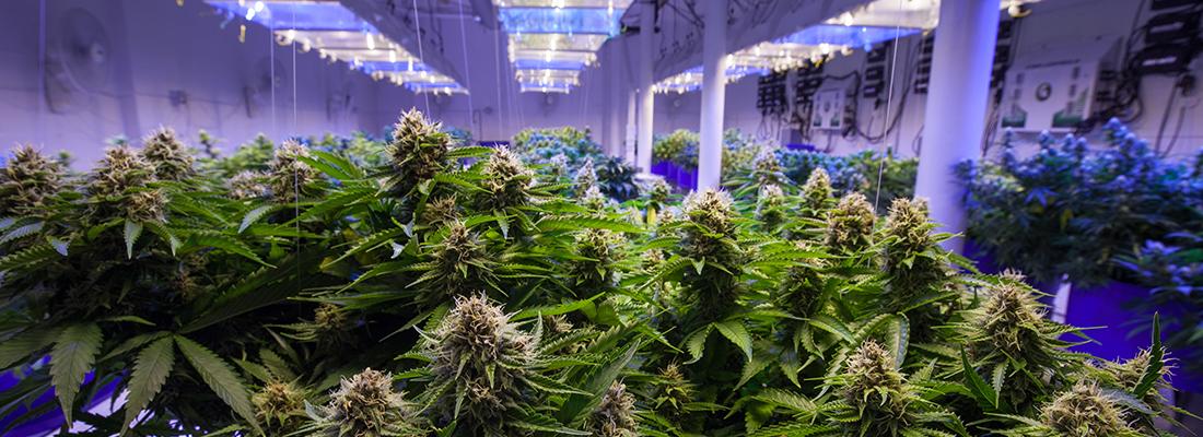 GRT - Cannabis grow op